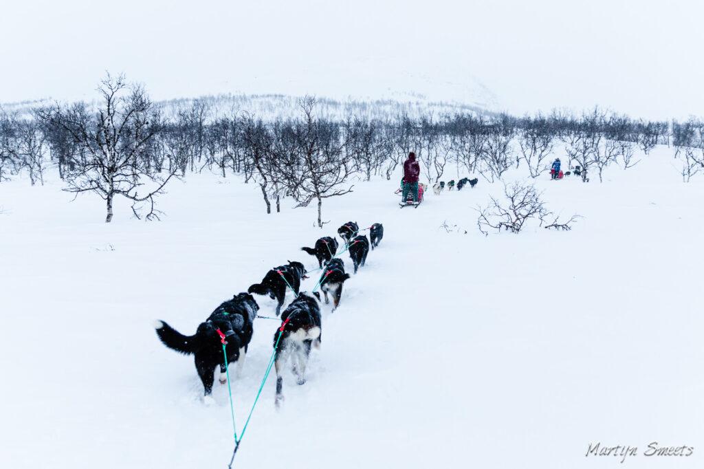 Hondensledetocht door Dividal, Noorwegen